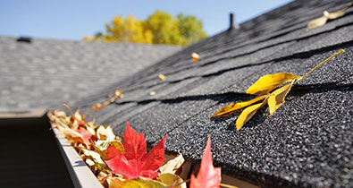 Autumn leaves on rooftop